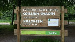 killykeen forest pic